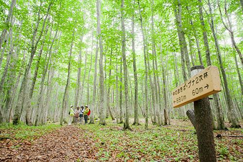 安比高原(ブナの二次林)のイメージ