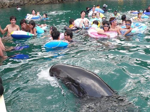 日本でここだけの感動体験!「くじらと泳げる海水浴場」で遊ぼう!!