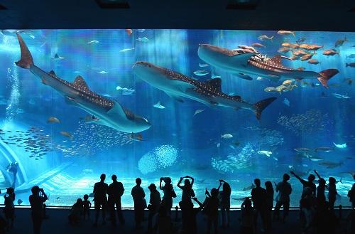 その他(沖縄美ら海水族館)のイメージ