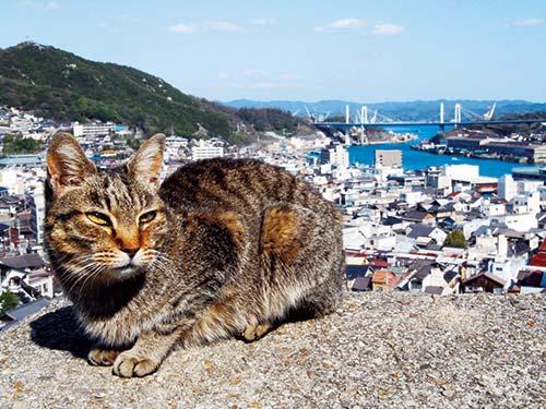 猫のいる風景(イメージ)