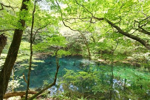 白神山地 十二湖青池のイメージ