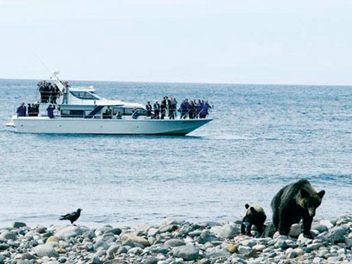 知床岬クルーズ(ヒグマウォッチ)のイメージ※野生動物のためご覧いただけない場合もあります。
