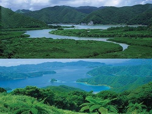 奄美大島 イメージ ※上から、大島海峡、マングローブ原生林