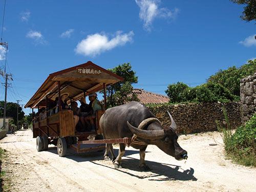 竹富島・水牛観光のイメージ
