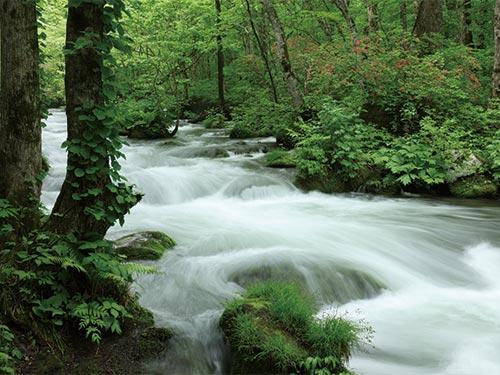 奥入瀬渓流のイメージ
