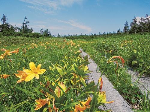 八幡平国立公園(8月)のイメージ
