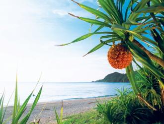 奄美大島 ビーチ/イメージ