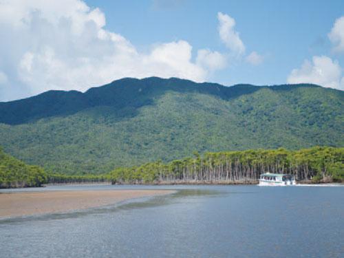 西表島 仲間川 イメージ ※マングローブクルーズは有料です ※西表島のホテルをお選びの場合追加代金がかかります