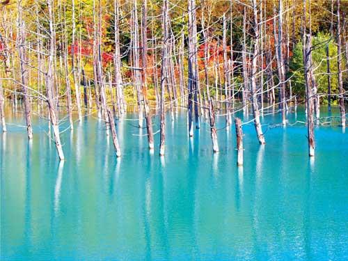青い池のイメージ