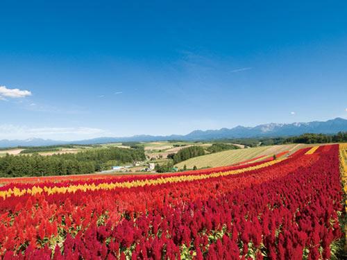 四季彩の丘のイメージ