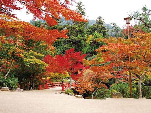宮島紅葉谷公園のイメージ(例年の見ごろは11月中旬〜12月上旬です)