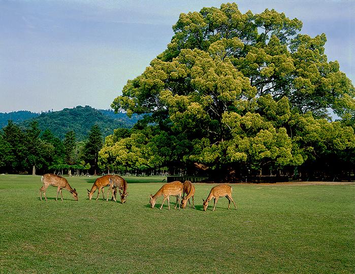 奈良のイメージ(奈良公園)