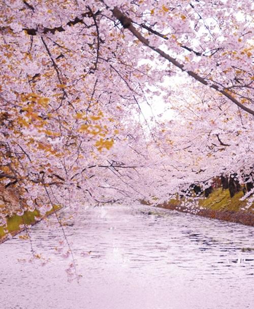 弘前公園 イメージ