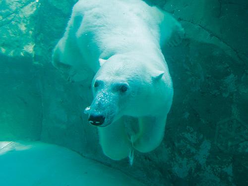 (写真提供:旭川市旭山動物園)のイメージ