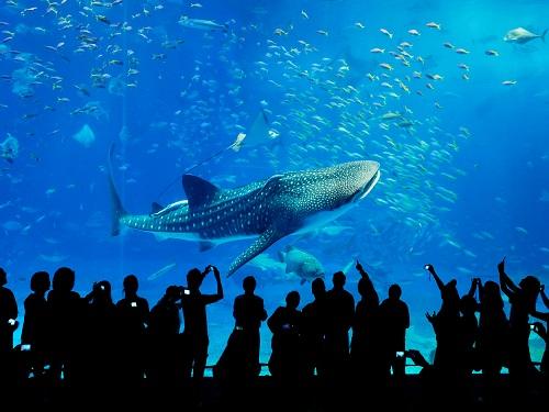 沖縄美ら海水族館 ※画像提供:海洋博公園