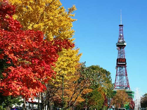 札幌 イメージ 大通公園(11月撮影)