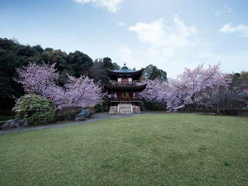 2018春JR東海「そうだ京都、行こう。」キャンペーン寺院 勧修寺(2017年4月撮影)