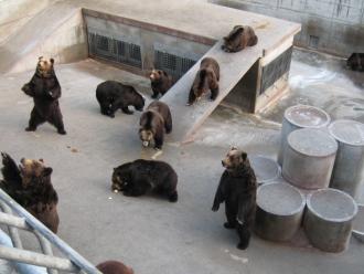 昭和新山熊牧場 ※入場+くまのエサ付