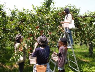 7〜10月はくだもの狩り体験付♪(写真は山本観光果樹園) ※果物は季節により変わります