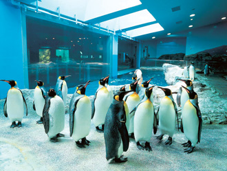 長崎ペンギン水族館 イメージ ※本コースは、入館券付(幼児除く)♪