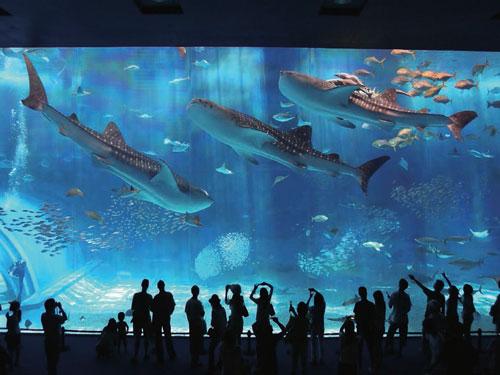 2日目割増追加代金オプションの「美ら島終日バスツアーの観光地 沖縄美ら海水族館(画像提供:海洋博公園)」イメージ