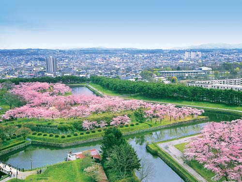 五稜郭公園の桜のイメージ