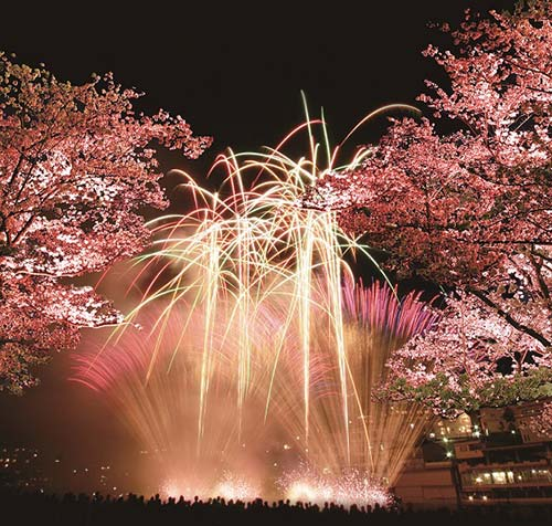 下呂温泉夜桜花火のイメージ (※下呂温泉観光協会提供)