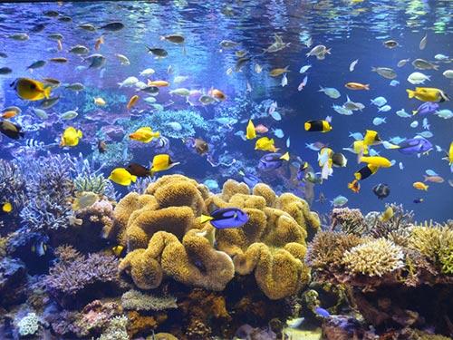 鳥羽水族館サンゴ水槽のイメージ