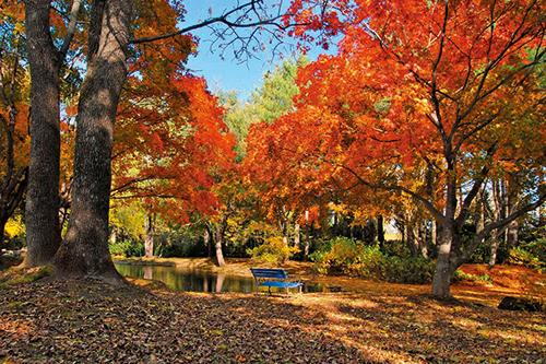 真鍋庭園(10月頃撮影)のイメージ※秋のとかち満腹ツアーで訪れます