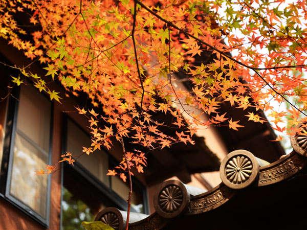 ド迫力!名瀑「桜滝」が観られる露天風呂が自慢!マイナスイオンを感じながらゆったり寛いで♪ 「ザ・九州」おおいた 九州に泊まろう!