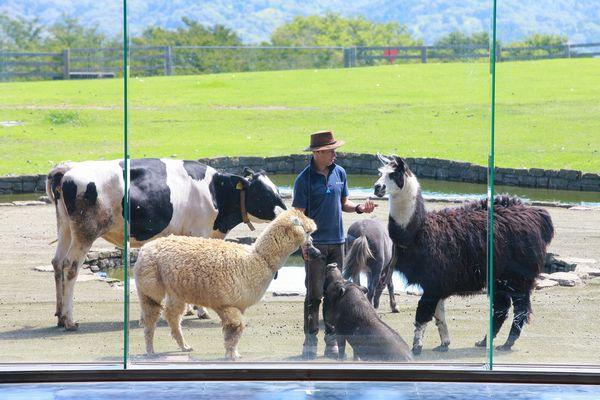 牧羊犬とまきばの仲間たちの一例