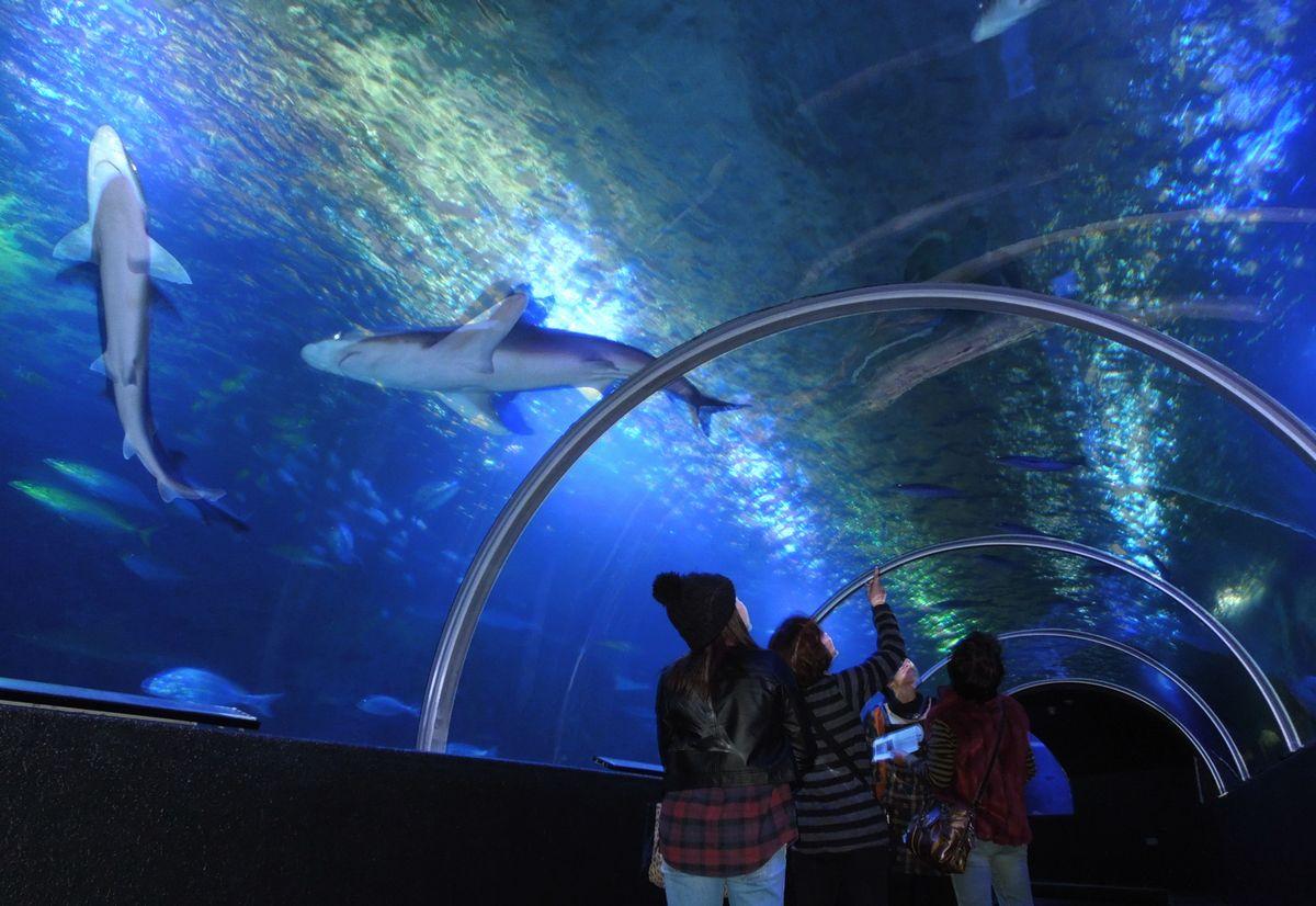 全景(水中トンネル)