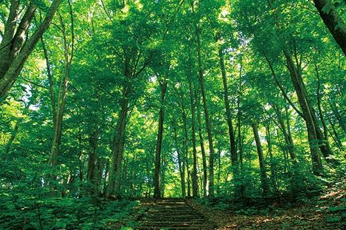世界自然遺産 白神山地