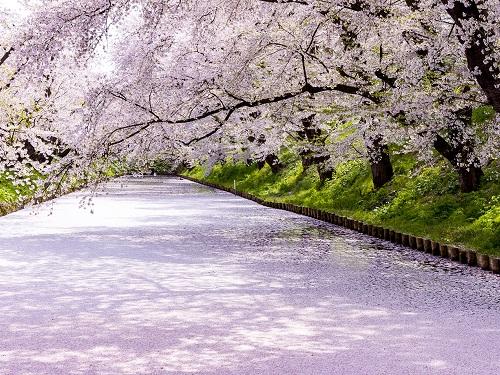 弘前公園・花筏のイメージ