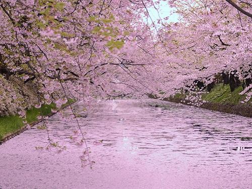 弘前公園 桜のイメージ