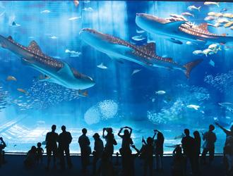 沖縄美ら海水族館(イメージ) ※沖縄満喫クーポン利用可