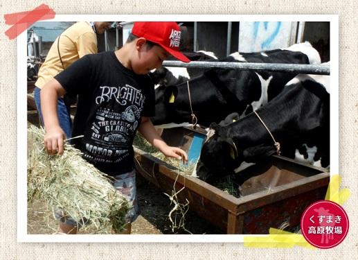 仔牛の世話体験のイメージ
